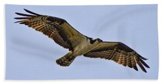 Designs Similar to Topsail Osprey by Betsy Knapp