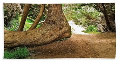 Tree And Trail Beach Towel by Bill Owen