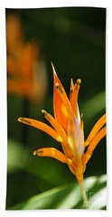 Tropical Orange Heliconia Flower Beach Sheet by Elena Elisseeva