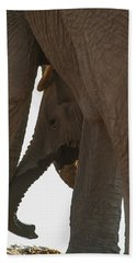 Trunk Touch Beach Towel