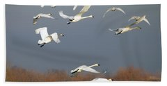 Tundra Swan Takeoff Beach Towel