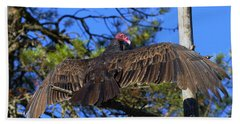 Turkey Vulture With Wings Spread Beach Towel by Sharon Talson
