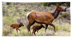 Beach Towel featuring the photograph Twin Elk Calves by Shane Bechler