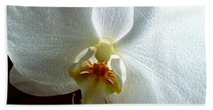 White Orchid Beach Sheet by Barbara Moignard