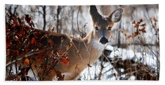 Whitetail Deer In Snow Beach Sheet by Nava Thompson