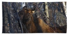 Beach Towel featuring the photograph Winter Food by Doug Lloyd