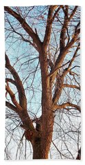Beach Towel featuring the photograph Winter Light by Chalet Roome-Rigdon