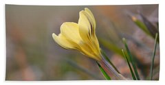 Yellow Crocus Beach Sheet by JD Grimes