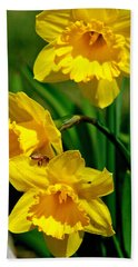 Beach Towel featuring the photograph Yellow Daffodils And Honeybee by Kay Novy