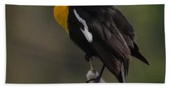 Yellow-headed Blackbird Beach Sheet
