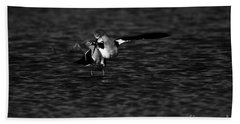 American Avocet Dance  Beach Sheet