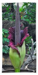 Corpse Flower Beach Towel