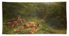 Foxes Waiting For The Prey   Beach Towel by Carl Friedrich Deiker