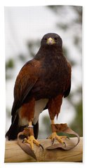Harris's Hawk Beach Sheet