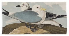 Kittiwake Gull Beach Towel by John James Audubon