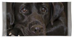 Labrador Retriever A1a Beach Towel
