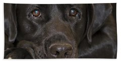 Labrador Retriever A1b Beach Towel