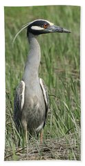 Beach Towel featuring the photograph Night Heron In Profile by William Selander