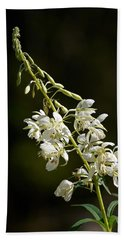 Beach Towel featuring the photograph  White Fireweed by Jouko Lehto