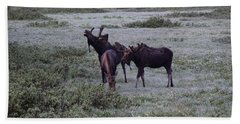 Moose Cameron Pass Co Beach Sheet