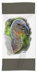 African Griffon Vulture Beach Sheet