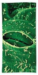 Agrobacterium Tumefaciens Beach Towel