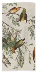 American Crossbill Beach Towel by John James Audubon