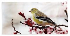 American Goldfinch In Spring Beach Towel by Trina Ansel