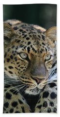 Amur Leopard #2 Beach Sheet