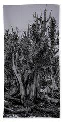 Ancient Bristlecone Pine Beach Sheet