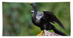 Anhinga Anhinga Anhinga Perching Beach Towel by Panoramic Images