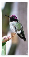 Anna's Hummingbird Beach Towel