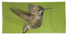 Anna's Hummingbird Beach Sheet