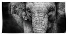 Baby Elephant Beach Sheet by Charuhas Images