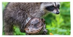 Beach Towel featuring the photograph Baby Racoon by Paul Freidlund