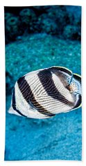 Beach Towel featuring the photograph Banded Butterflyfish by Perla Copernik