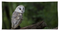Barn Owl In The Woods Beach Sheet by Andrea Silies