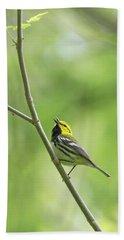 Black-throated Green Warbler Beach Sheet