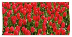Blooming Red Tulips Beach Sheet