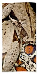 Boa Constrictor Beach Sheet by Dant� Fenolio