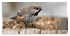 Boreal Chickadee Beach Sheet