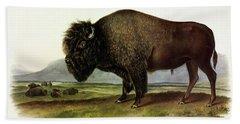 Bos Americanus, American Bison, Or Buffalo Beach Towel
