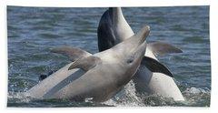 Bottlenose Dolphins  - Scotland  #15 Beach Sheet