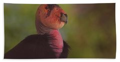 California Condor Beach Sheet