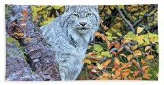 Canada Lynx Beach Towel by Jack Bell