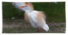 Cattle Egret Walking Close Beach Towel