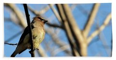 Cedar Wax Wing Beach Towel by David Arment