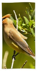 Cedar Waxwing Closeup Beach Towel