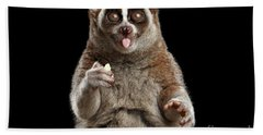 Close-up Lemur Slow Loris Isolated Black Background Beach Towel