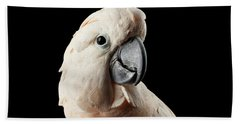 Closeup Head Of Beautiful Moluccan Cockatoo, Pink Salmon-crested Parrot Isolated On Black Background Beach Towel